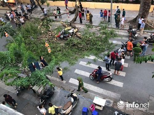 Hà Nội: Cây cổ thụ bỗng đổ kinh hoàng, xe đè bẹp, 5 người bị thương - Ảnh 1