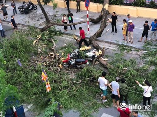 Hà Nội: Cây cổ thụ bỗng đổ kinh hoàng, xe đè bẹp, 5 người bị thương - Ảnh 2