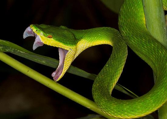 Ám ảnh kinh hoàng nỗi lo rắn độc cắn vào mùa mưa - Ảnh 2