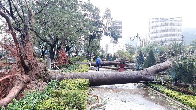 Hàng loạt cây xanh đổ ngổn ngang sau ảnh hưởng của bão số 5 - Ảnh 1