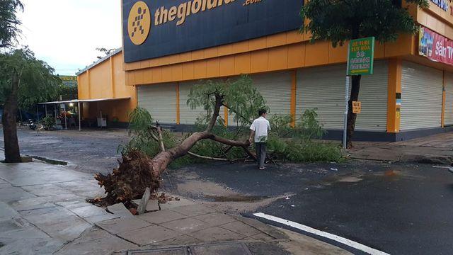 Hàng loạt cây xanh đổ ngổn ngang sau ảnh hưởng của bão số 5 - Ảnh 2