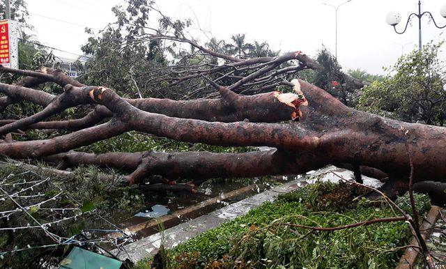 Hàng loạt cây xanh đổ ngổn ngang sau ảnh hưởng của bão số 5 - Ảnh 3
