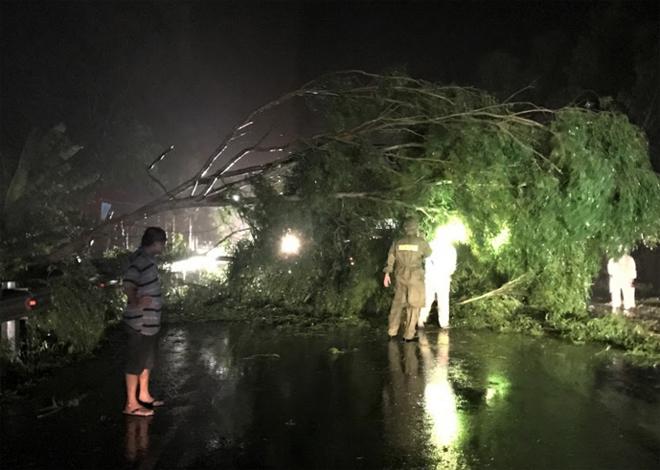 Hàng loạt cây xanh đổ ngổn ngang sau ảnh hưởng của bão số 5 - Ảnh 4
