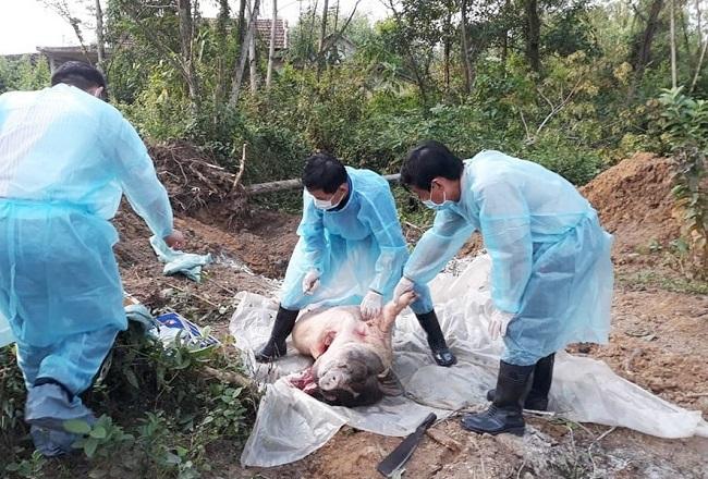 Bắt chủ tịch xã cùng 3 cán bộ khai khống lợn bị nhiễm dịch tả châu Phi để trục lợi - Ảnh 1