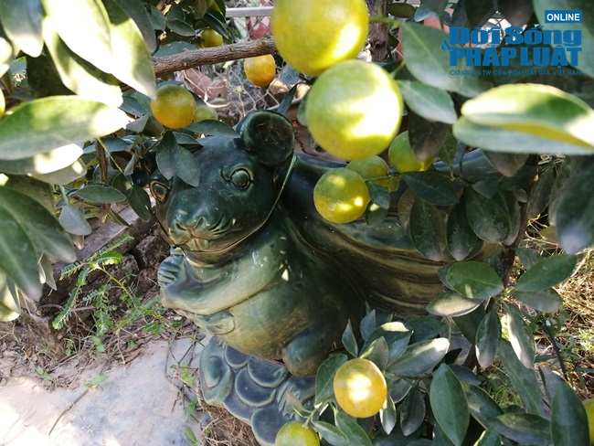 """Hút mắt với dàn cây """"chuột cõng quất bonsai"""" chưng ngày Tết - Ảnh 5"""