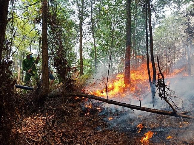 Lại xảy ra cháy rừng tại Hà Tĩnh, hàng trăm người tham gia dập lửa - Ảnh 1