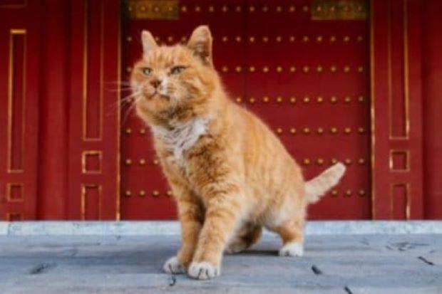 Mèo tiên tri World Cup ở Trung Quốc tử vong do đau tim - Ảnh 1