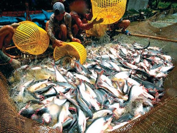 Công nghệ sản xuất cá tra mới của Việt Nam lên báo nước ngoài - Ảnh 1