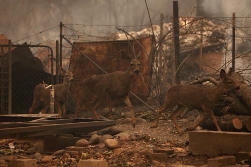 Thảm họa cháy rừng ở California: Khi thiên nhiên bị nhấn chìm trong biển khói lửa - Ảnh 7