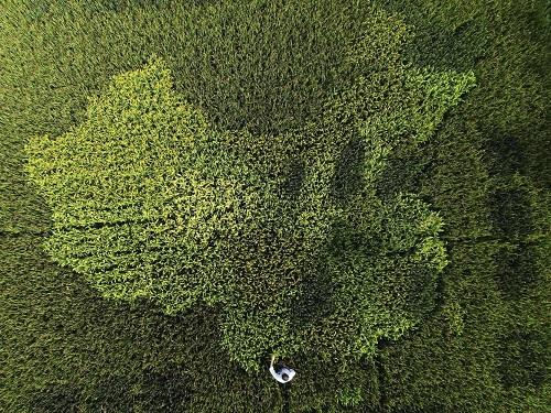 Cảnh quan hùng vĩ của Trung Quốc qua những bức ảnh tuyệt đẹp chụp từ trên cao - Ảnh 1