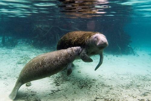 Mexico khởi động điều tra tìm nguyên nhân bí ẩn khiến 'nàng tiên cá' chết hàng loạt  - Ảnh 1
