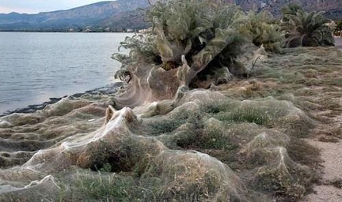 Mạng nhện khổng lồ dài hơn 300 mét xuất hiện ở Hy Lạp - Ảnh 2