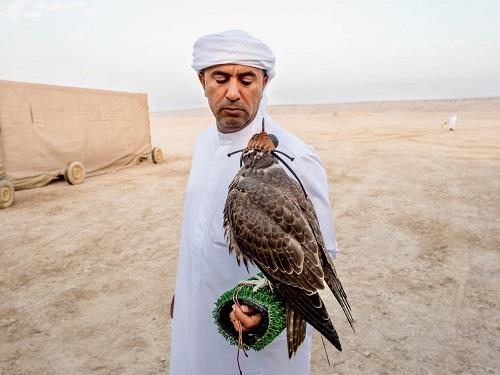 Huấn luyện chim ưng: Nghề kiếm ra hàng triệu USD ở Trung Đông - Ảnh 1