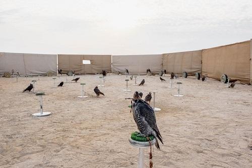 Huấn luyện chim ưng: Nghề kiếm ra hàng triệu USD ở Trung Đông - Ảnh 4