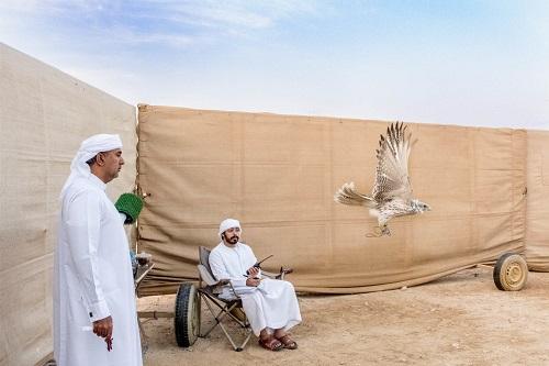 Huấn luyện chim ưng: Nghề kiếm ra hàng triệu USD ở Trung Đông - Ảnh 5