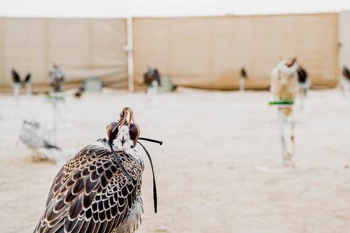 Huấn luyện chim ưng: Nghề kiếm ra hàng triệu USD ở Trung Đông - Ảnh 7
