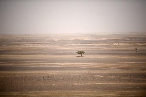 Hi hữu: Cậu bé 5 tuổi sống sót kỳ diệu sau khi bị lạc suốt 24 giờ trong sa mạc Argentina - Ảnh 1