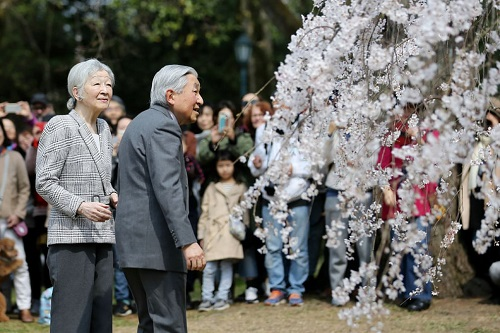 Những bức ảnh tuyệt đẹp về mùa hoa anh đào Nhật Bản 2019 - Ảnh 12