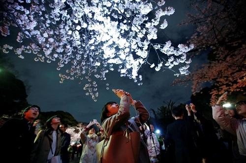Những bức ảnh tuyệt đẹp về mùa hoa anh đào Nhật Bản 2019 - Ảnh 3