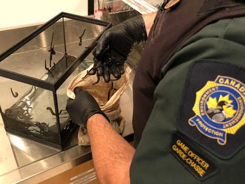 Người đàn ông Canada bị bắt vì mang hàng ngàn con đỉa sống lên máy bay - Ảnh 1