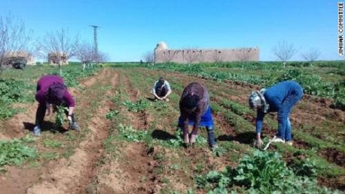 Mệt mỏi vì chiến tranh, phụ nữ Syria xây dựng ngôi làng theo kiểu 'Nữ nhi quốc' - Ảnh 3