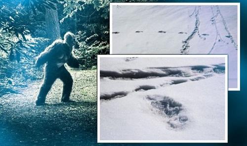 Quân đội Ấn Độ tuyên bố tìm thấy dấu chân của quái vật huyền thoại Yeti ở Himalaya - Ảnh 1