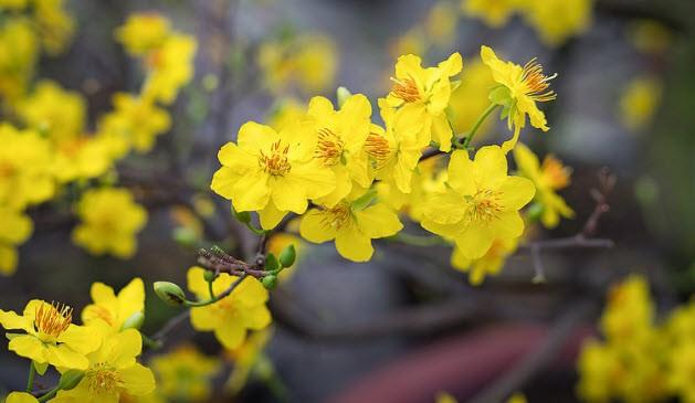 Chơi hoa ngày Tết: Nét đẹp văn hóa dân tộc! - Ảnh 3