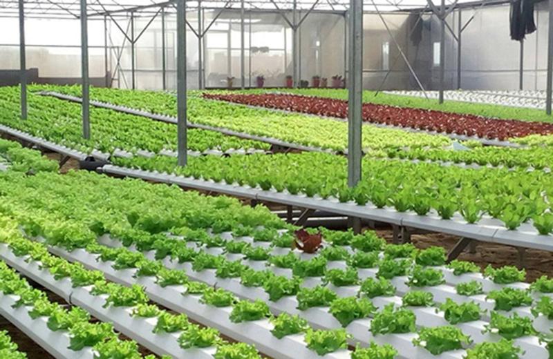 Về mô hình mở đường cho kinh tế hợp tác phù hợp với  trình độ của kinh tế hộ nông dân - Ảnh 2