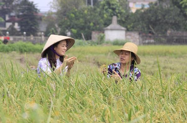Về mô hình mở đường cho kinh tế hợp tác phù hợp với  trình độ của kinh tế hộ nông dân - Ảnh 1