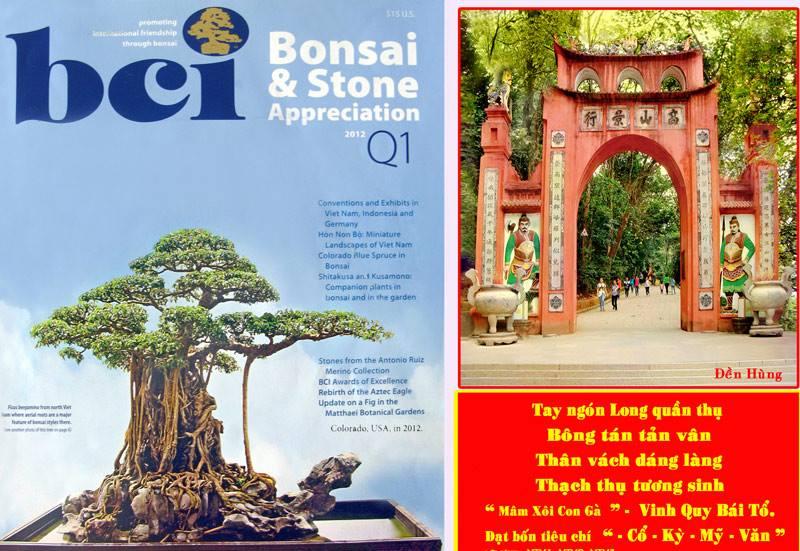 Tuyệt phẩm Mâm Xôi Con Gà: Một huyền tích từ văn hóa truyền thống đến ngôi sao truyền thông Cây cảnh nghệ thuật Việt Nam - Ảnh 3