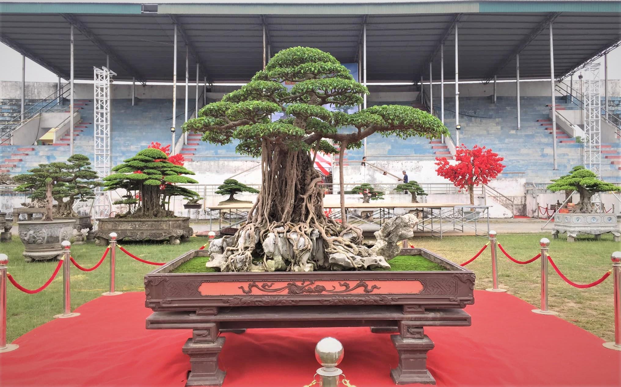 Triển lãm Sinh Vật Cảnh huyện Phúc Thọ (Hà Nội): Nơi hội tụ tinh hoa cây cảnh Việt - Ảnh 2