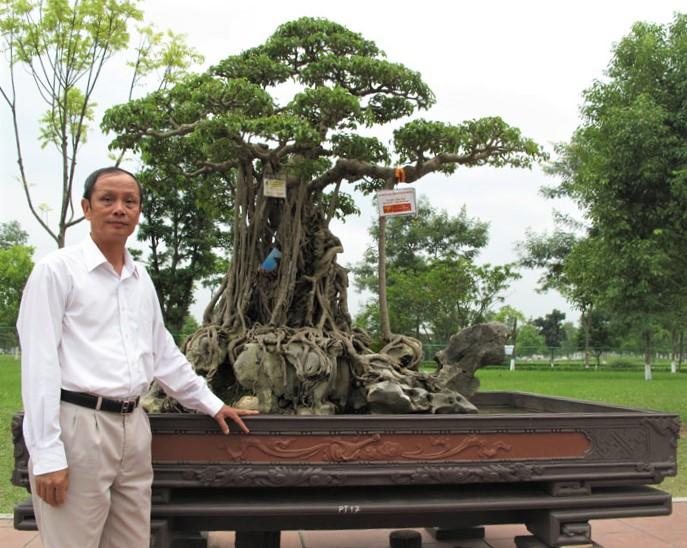 Tuyệt phẩm Mâm Xôi Con Gà: Một huyền tích từ văn hóa truyền thống đến ngôi sao truyền thông Cây cảnh nghệ thuật Việt Nam - Ảnh 1