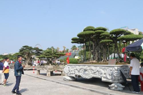 Khai mạc Festival cây cảnh – đá quý – đá phong thủy - Ảnh 4