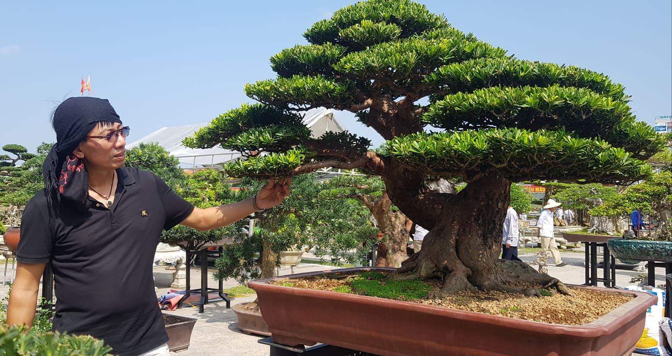 Khai mạc Festival cây cảnh – đá quý – đá phong thủy - Ảnh 7