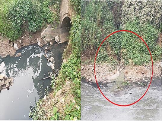 Phúc Thọ (Hà Nội): Dòng sông bốc mùi hôi thối, đặc quánh chất thải quanh năm? - Ảnh 2