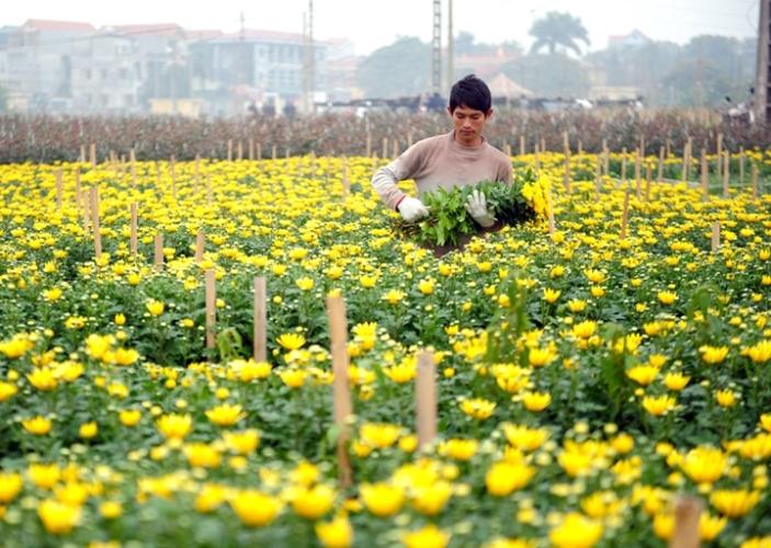 Định hướng phát triển Nông nghiệp và xây dựng Nông thôn mới của Hà Nội giai đoạn 2021 - 2030 - Ảnh 1