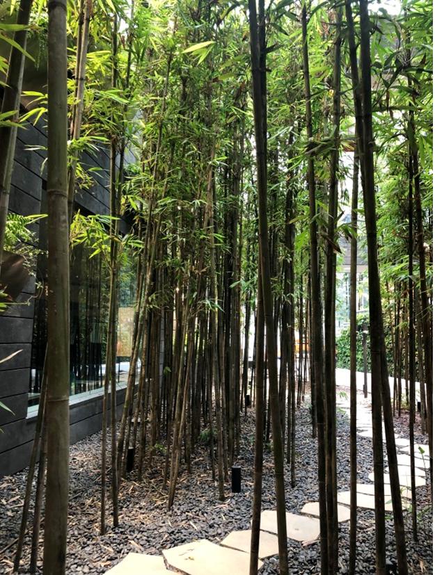 Mô hình sân bay công viên sinh thái Jawel Changi tại Singapore - Ảnh 7