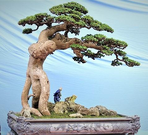 Hội nhập cây cảnh nghệ thuật, bonsai Quốc tế: Cách tiếp cận nào phù hợp với Việt Nam - Ảnh 17