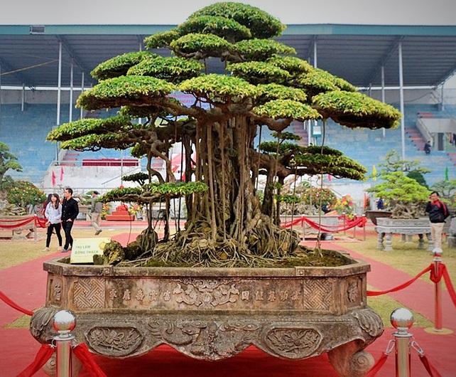Hội nhập cây cảnh nghệ thuật, bonsai Quốc tế: Cách tiếp cận nào phù hợp với Việt Nam - Ảnh 14