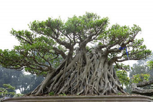 Về chùa Trầm nhớ lại chuyện 30 năm trước đi tìm cây cảnh - Ảnh 2