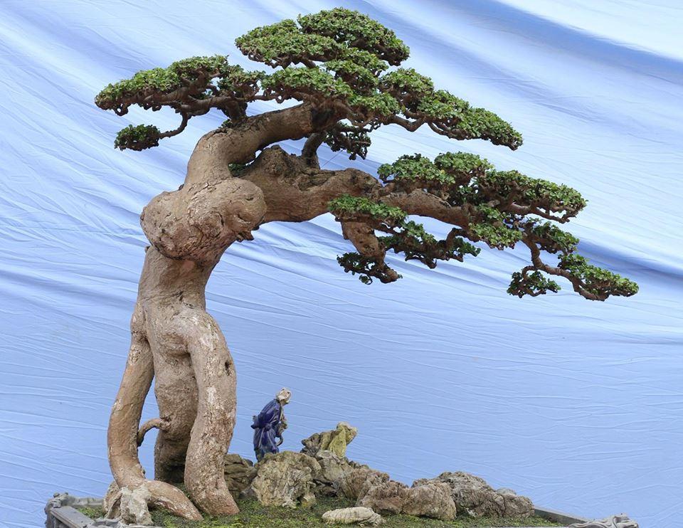 Phát huy tinh thần Tết Trồng cây trong phát triển Sinh Vật Cảnh hiện nay - Ảnh 5