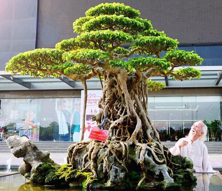 Phát huy tinh thần Tết Trồng cây trong phát triển Sinh Vật Cảnh hiện nay - Ảnh 8