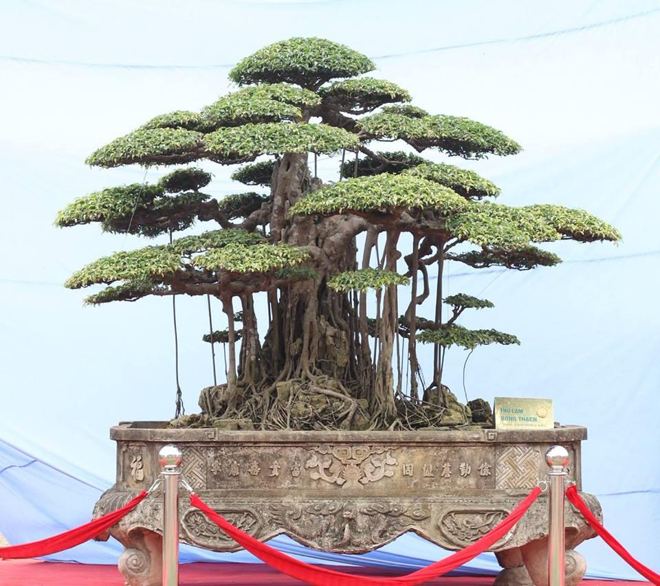 Phát huy tinh thần Tết Trồng cây trong phát triển Sinh Vật Cảnh hiện nay - Ảnh 6