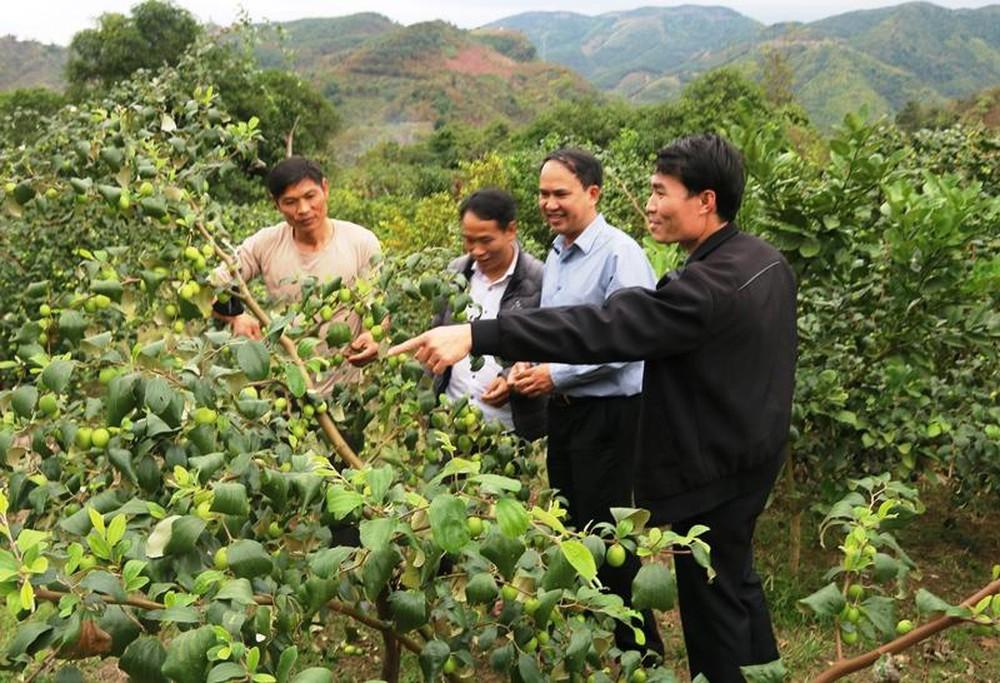 Kinh tế hợp tác trong phát triển nông nghiệp Sơn La, dưới góc nhìn nghiên cứu - Ảnh 1