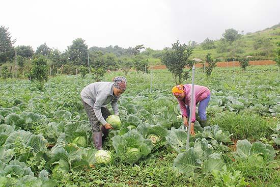 Kinh tế hợp tác trong phát triển nông nghiệp Sơn La, dưới góc nhìn nghiên cứu - Ảnh 2