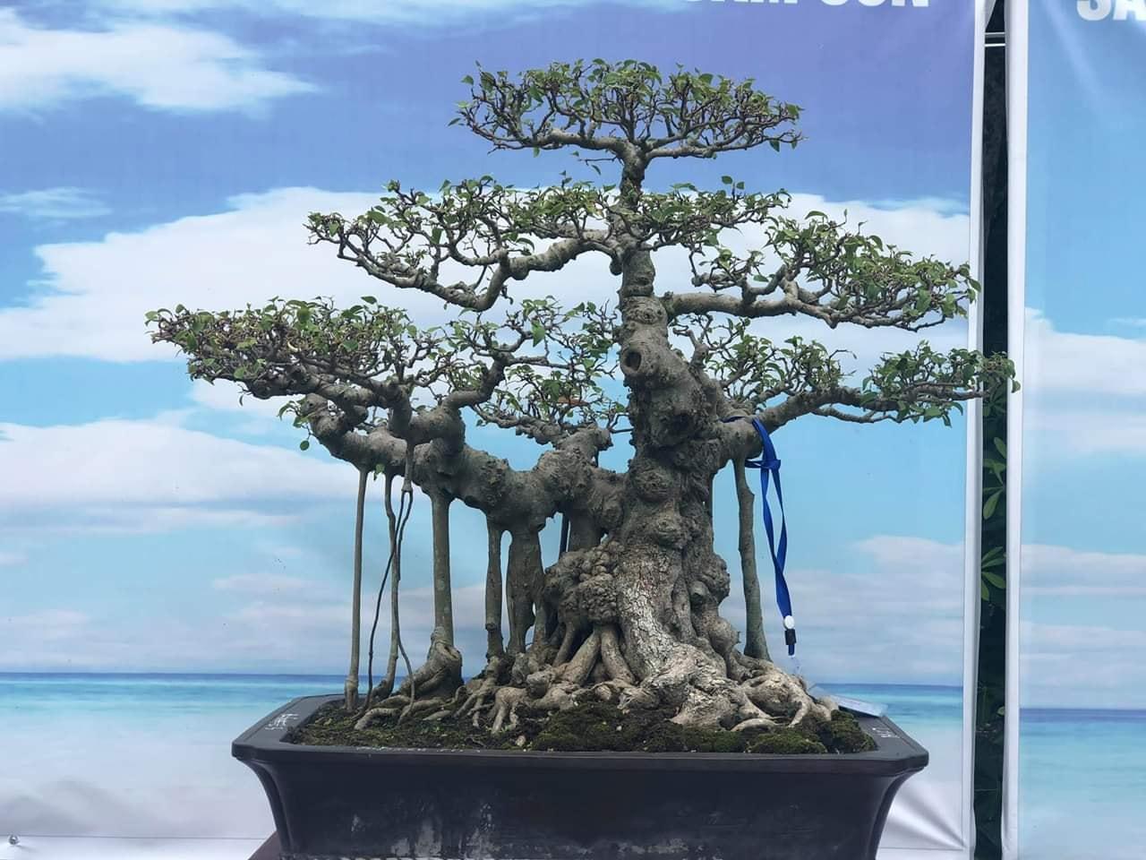 Khai mạc Triển lãm tư liệu ảnh Bác Hồ với Sầm Sơn và Sinh Vật Cảnh toàn quốc - Ảnh 5