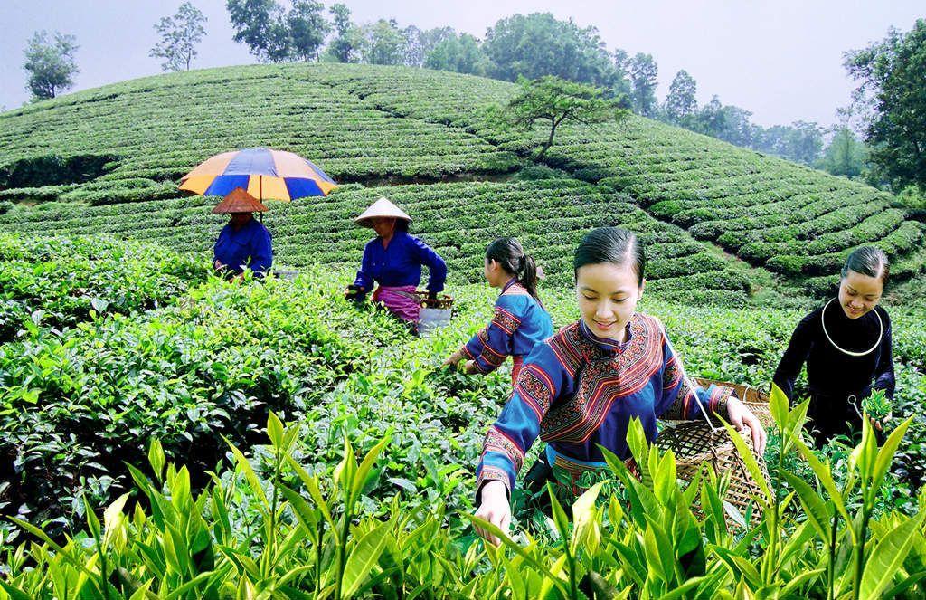 Tăng cường năng lực lao động nông thôn phục vụ khởi nghiệp nông nghiệp công nghệ cao, tham gia chuỗi giá trị nông sản toàn cầu (Phần III) - Ảnh 1