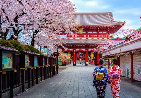 Tour Nhật Bản - Ngắm hoa anh đào dịp tết canh tý 2020 - Ảnh 1