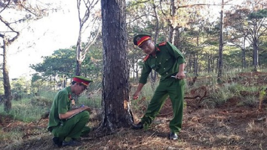 """Cử 2 Phó Bí thư Tỉnh ủy Đắk Nông làm rõ việc """"bức tử"""" rừng thông - Ảnh 1"""