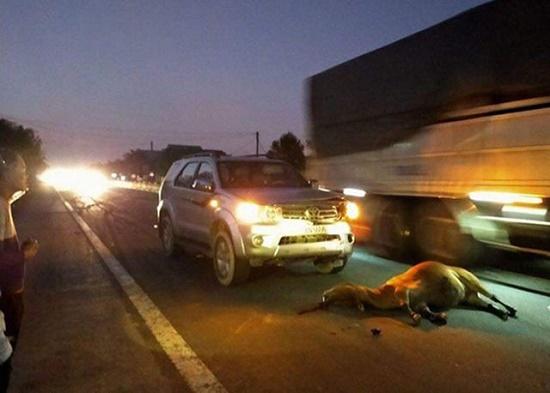 Tin tức tai nạn giao thông mới nhất hôm nay 27/11/2019: Ôtô đâm dải tôn bên đường, tài xế thoát nạn - Ảnh 2